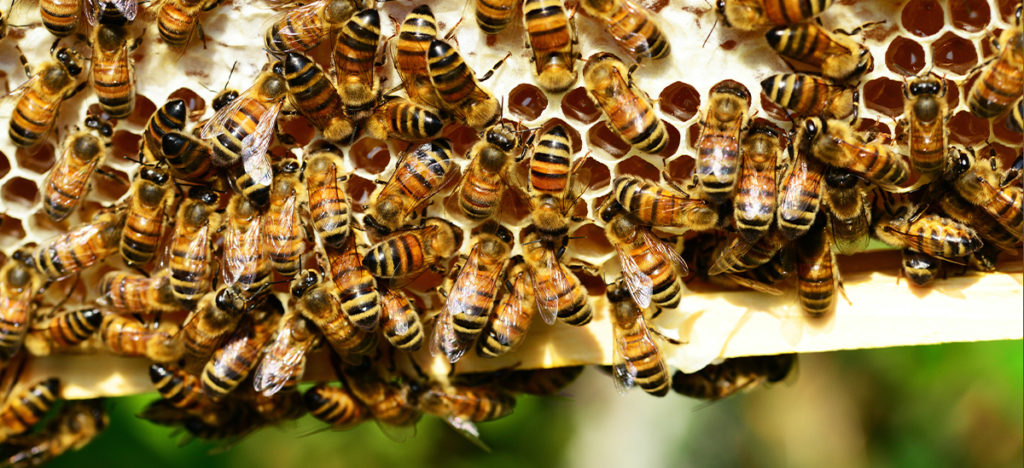 Bees on honeycomb | Palmers Business Support